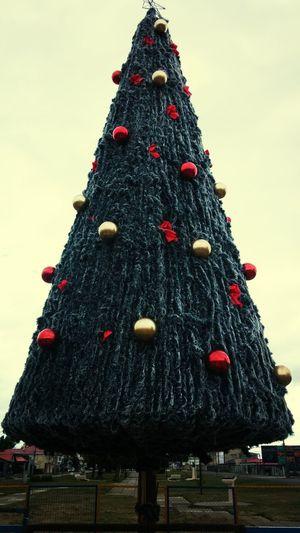 Christmas Tree Walking Around Taking Photos
