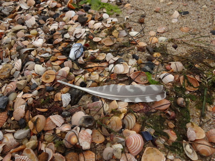 High Angle View No People Day Nature Outdoors Close-up Scenics Tide Land Beach Strand Nordsee Northsea Bird Feather Vogelfeder Muschelschalen Shells Seashore Seaside Stones Colourful Beauty In Nature