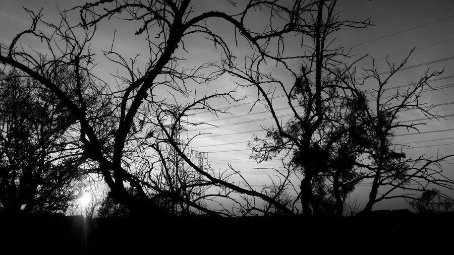 Silhouette Tree Abstract Backgrounds Sky Branch No People Nature Day Close-up Outdoors Beauty In Nature Journey Faces Of Africa EyeEm Gallery South Africa EyeEm Selects Personal Perspective EyeEm Silhouette Tree Freshness The Week On EyeEm