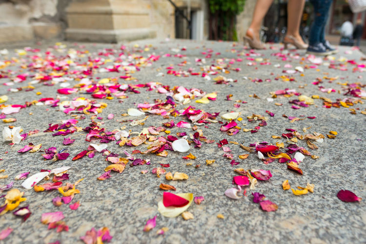 Petals, after a wedding ceremony in the townhall Germany🇩🇪 Terrace Wedding Abundance Adult Autumn Beauty In Nature Change Close-up Day Flower Fragility Freshness Human Body Part Large Group Of Objects Leaf Low Section Multi Colored Nature One Person Outdoors People Petal Strew Wedding Ceremony