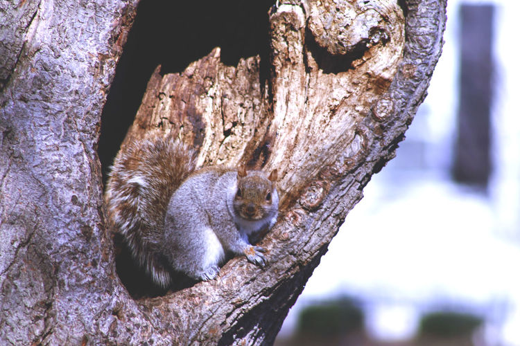 Squirrel on