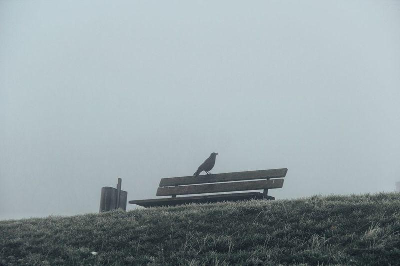 Nature Naturephotography Sky Parkbank Rabe Nebel EyeEmNewHere