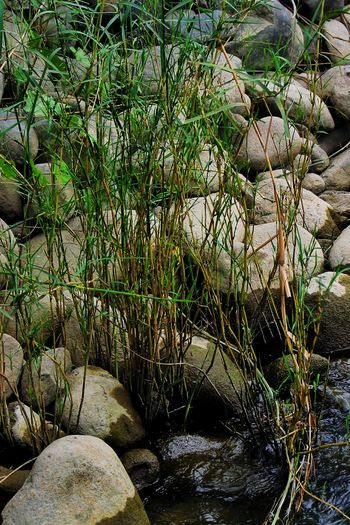 Grass over the Water, Agno River Philippines Day Outdoors Nature Growth No People Water Beauty In Nature Close-up Grass Lake Grass River Grass Stone Grass Stone EyeEmNewHere Wildlife