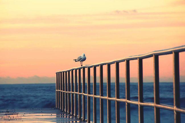Coastalimage Merewether Australia Beach Nsw Sunrise_sunsets_aroundworld Bestthingever Seagull