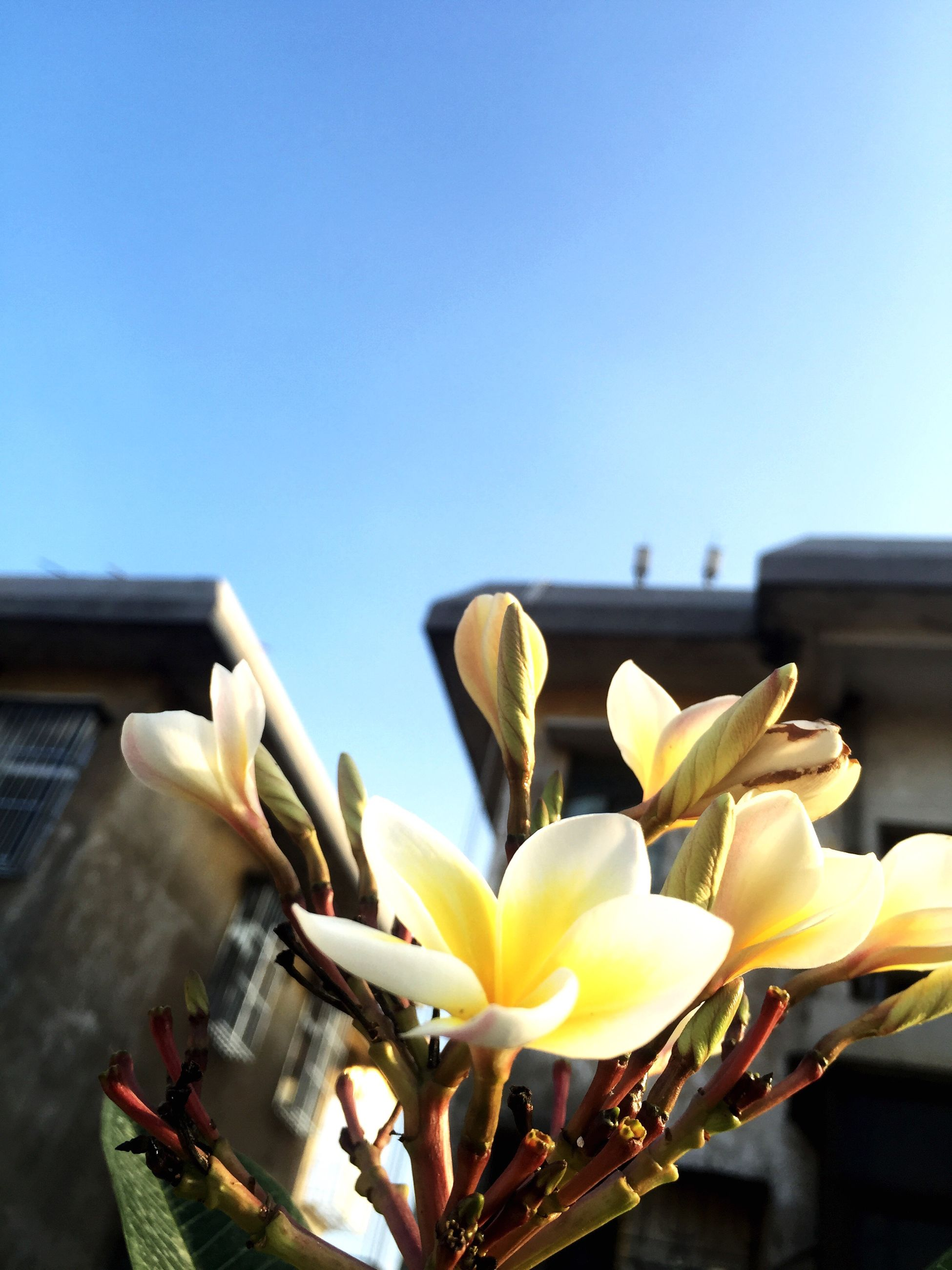 clear sky, copy space, blue, focus on foreground, building exterior, close-up, built structure, architecture, no people, part of, day, transportation, outdoors, cropped, sky, mode of transport, sunlight, metal, nature, flower