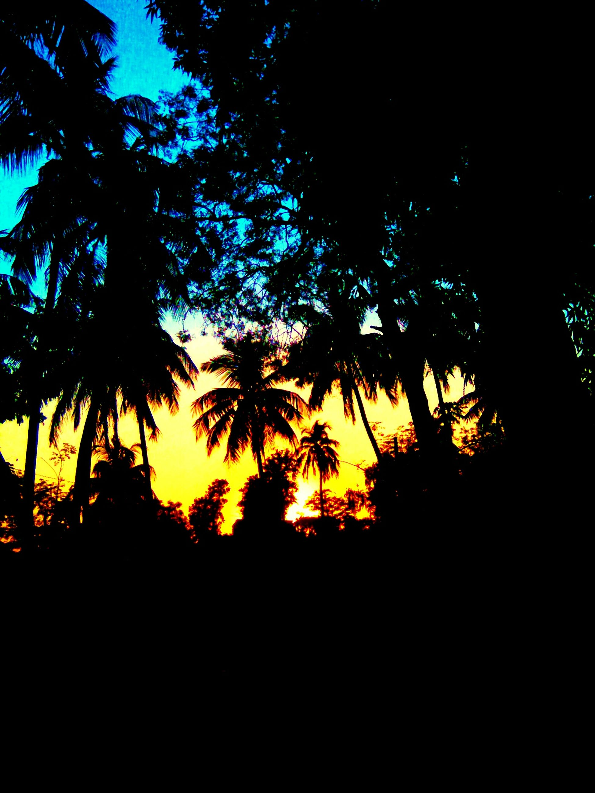 silhouette, tree, sunset, beauty in nature, tranquility, scenics, growth, tranquil scene, sky, low angle view, nature, branch, idyllic, dark, orange color, palm tree, outdoors, no people, outline, dusk