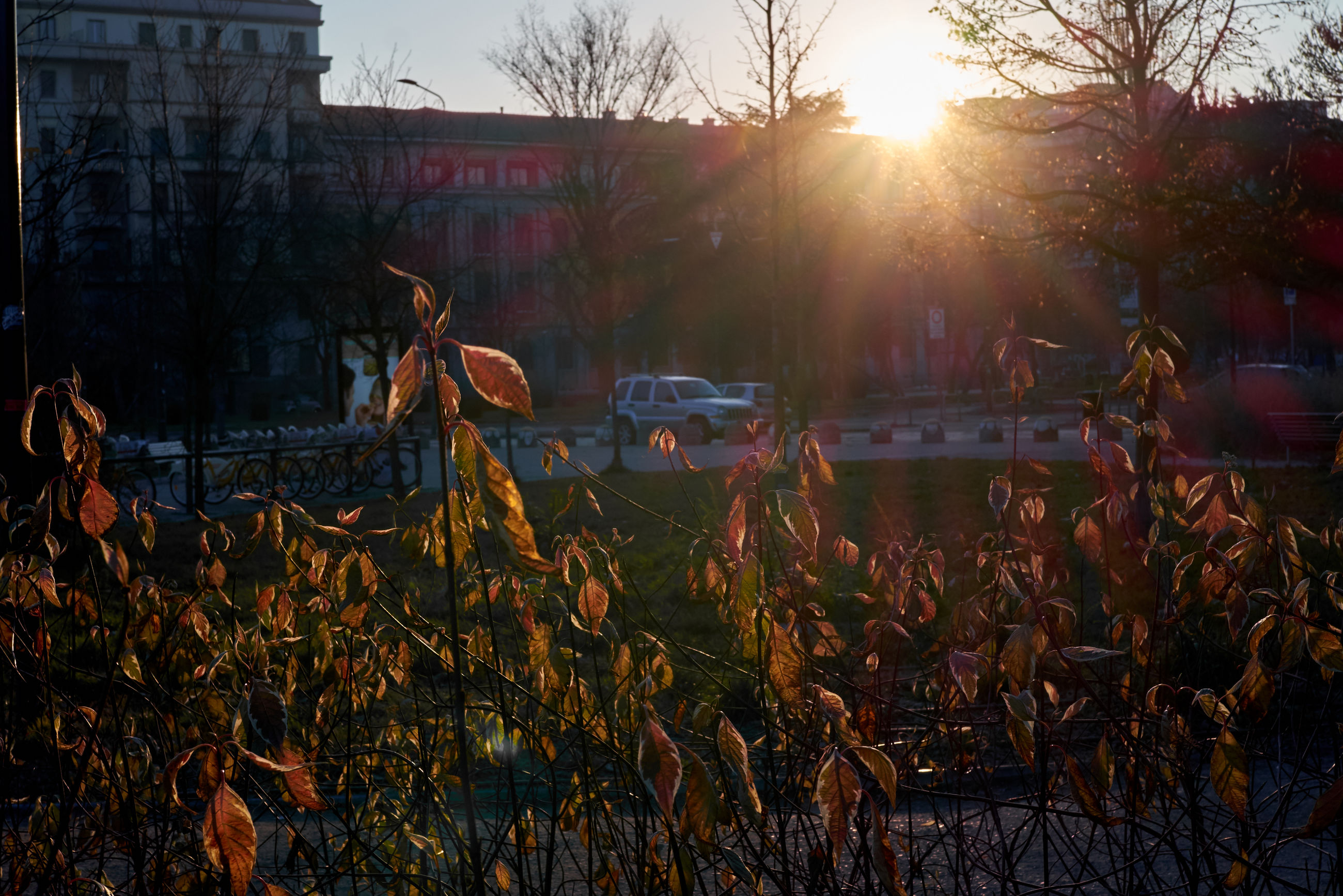building exterior, lens flare, sunset, sunlight, built structure, architecture, tree, outdoors, city, sunbeam, nature, no people, sky, grass, day