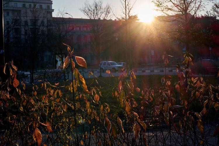 Sunlight Outdoors No People Day Winter Golden Hour Urban Landscape Urban Nature Golden Light Goldenhour