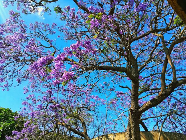 A flower cannot blossom without sunshine, and man cannot live without love. Max Muller Usthb Algeria Tourismalgeria Algerian Blogger Alg 2018 Tree Flower Branch Backgrounds Full Frame Sky Plant Life Flower Tree First Eyeem Photo