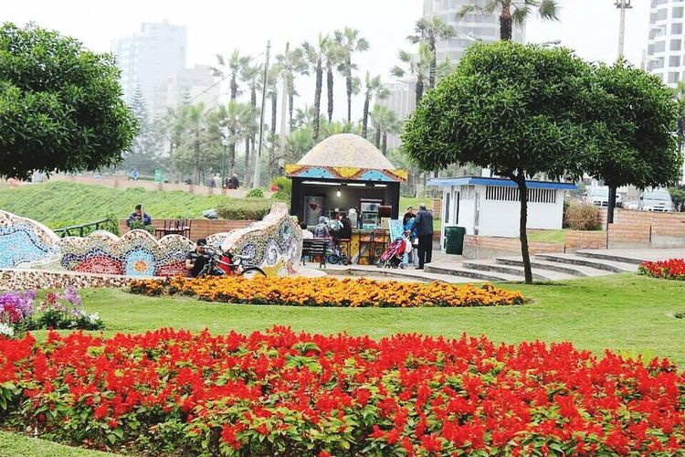 Miraflores Lima Peru Beauty In Nature Flowerbed Tree Flower Nature Park - Man Made Space Multi Colored Ornamental Garden Outdoors City Adults Only Day Sky People Freshness Adult Relaxing Popular Photos