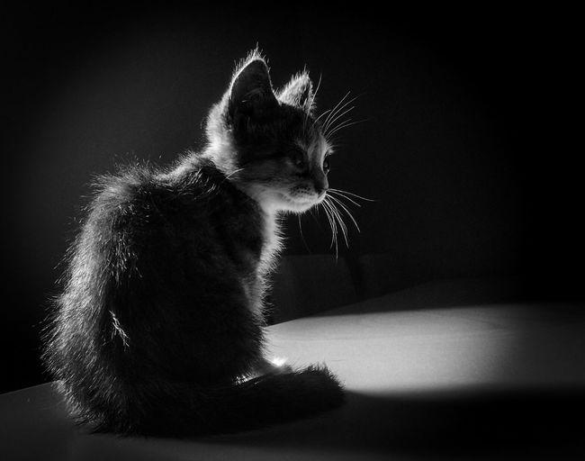 cat catslover