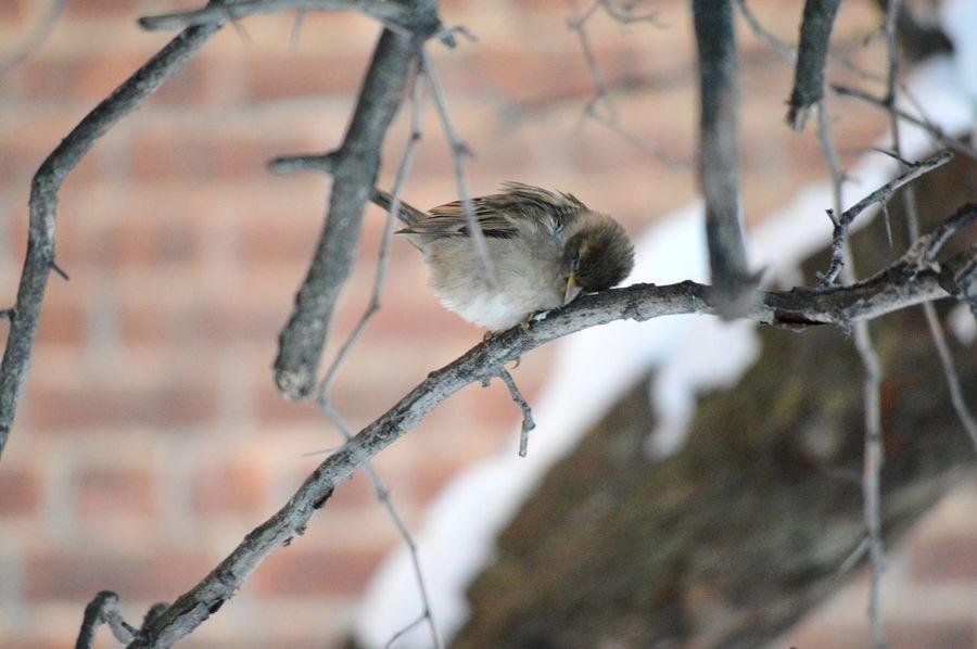 Nature's Diversities Sleeping Bird Bird Tired As Hell Nature Photography