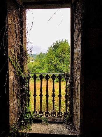 Window Architecture Room With A View Decadence Ruin Nature Reclaims.