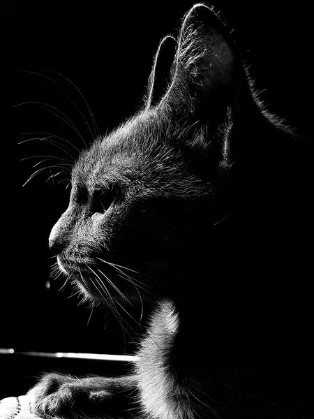 Doris the cat Cat Mobilephotography Mobile Photography Mobgraphia Mobile Phone EyeEmNewHere Pets Pet Pets Corner Cats Cats Of EyeEm EyeEm Selects Blackandwhite Black White B&w Black Background Close-up