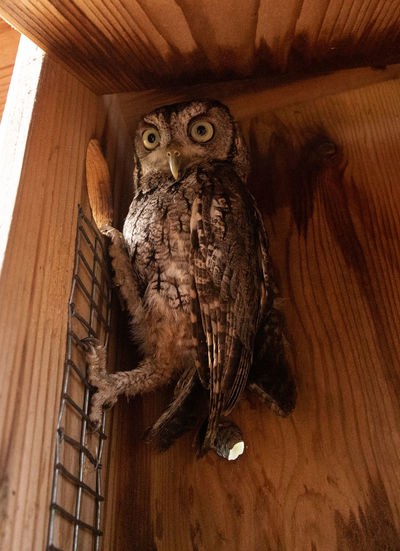 Low angle view of owl perching on wood