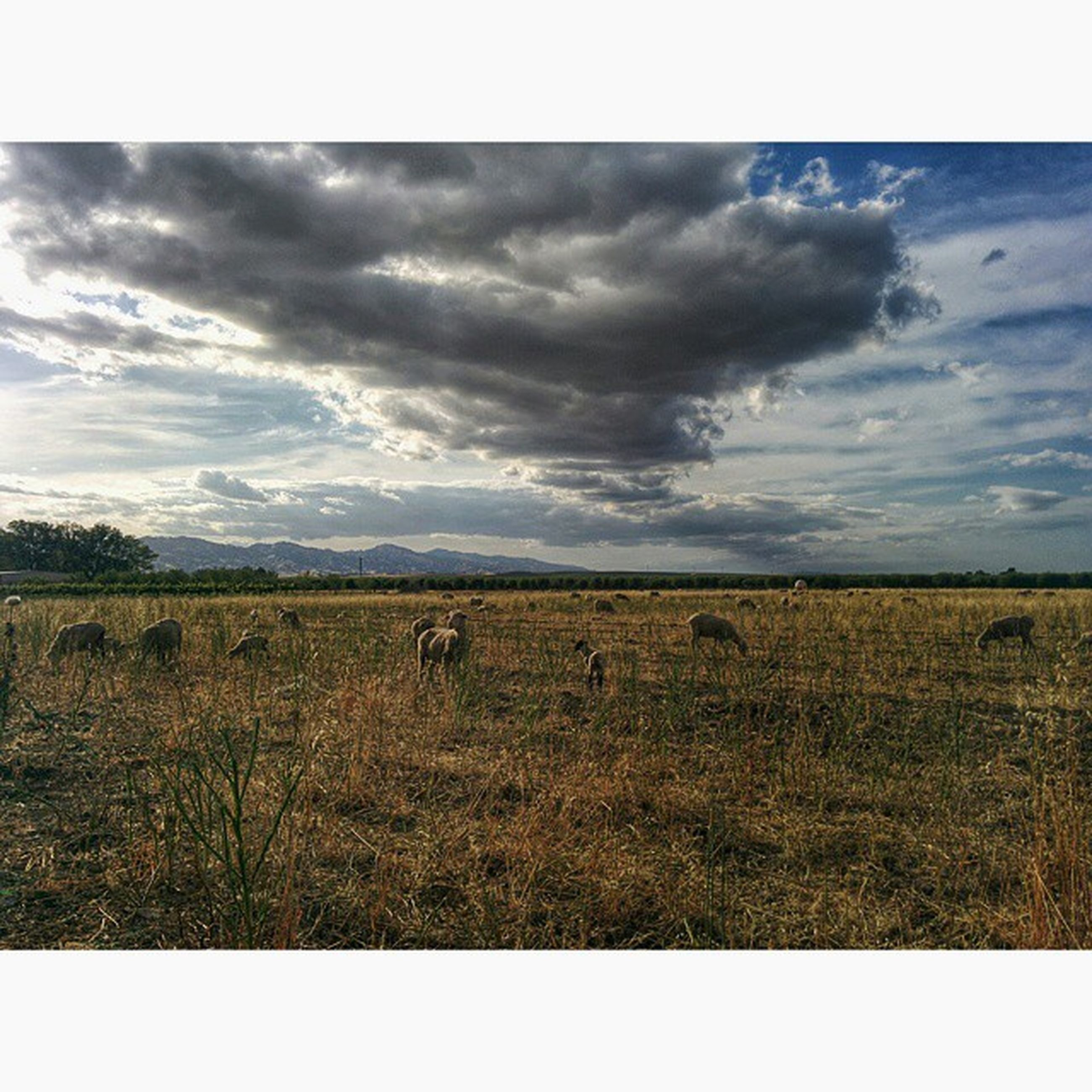 sky, field, cloud - sky, landscape, tranquil scene, cloudy, tranquility, rural scene, scenics, nature, beauty in nature, cloud, grass, transfer print, horizon over land, auto post production filter, agriculture, growth, overcast, farm