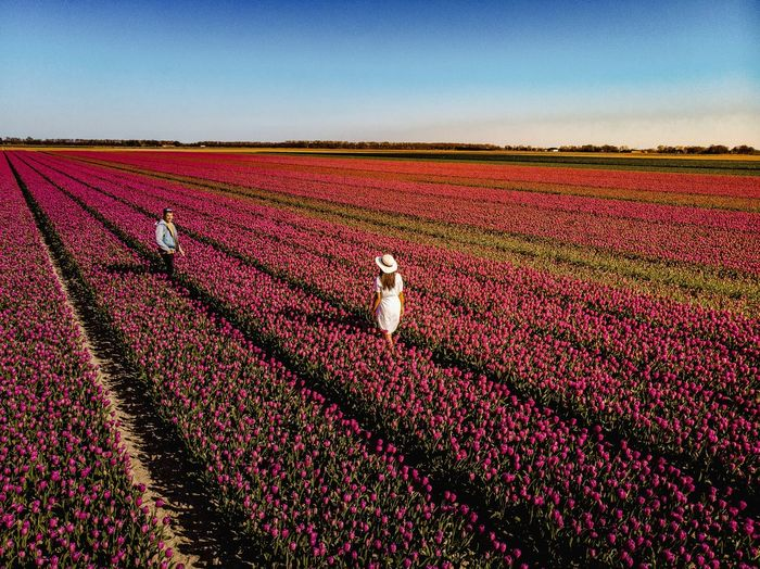 Tulips Tulips In The Springtime Tulips Flowers Netherlands Couple Tourist Netherlands Dailydoseofcolor Couple Couple Travelling Marketplace Rural Scene Agriculture Farmer Red Field Crop  Pattern Landscape Sky Plowed Field Cultivated Land Cultivated Plantation Tractor Farm Patchwork Landscape Rice Paddy Plough Agricultural Field