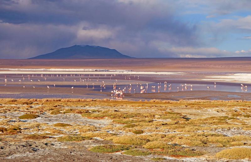 View of birds on beach against cloudy sky