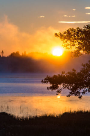 Sunrise on foggy lake Morning Beauty In Nature Cloud - Sky Fog Foggy Landscape Nature No People Orange Color Outdoors Reflection Scenics Silhouette Sky Sun Sunlight Sunrise Sunset Tranquil Scene Tranquility Tree Water