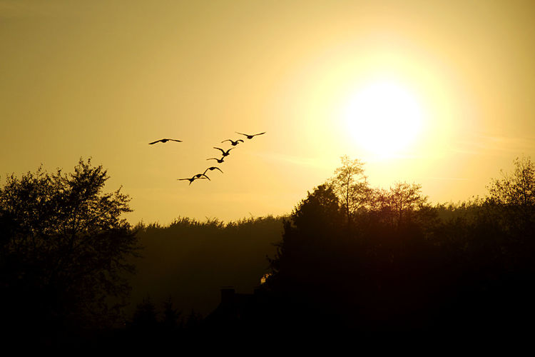 Silhouette of bird flying in sky at sunset