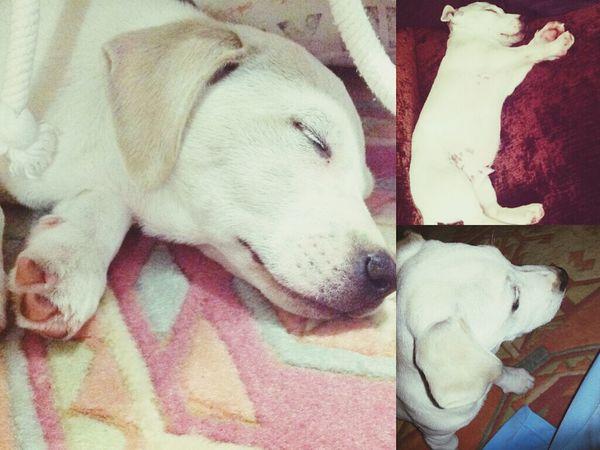 Newfriend Dog Jackrussell Rocky