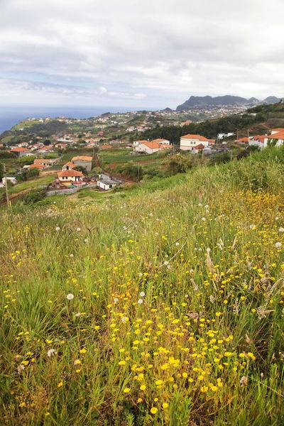 Bildings Blue Flower Green Island Madeira Ocean Porto Moniz Madeira Portugal Rocks Travel Water