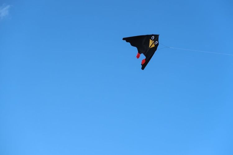 High as a kite Penguin Sky Blue Clear Sky Copy Space Low Angle View Kite - Toy Flying Nature Mid-air No People Day Wind Environment Outdoors Kite Shape Freedom