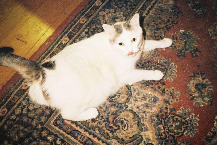 Mika Cat Cats