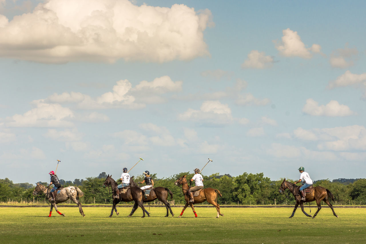 real people, field, sky, horse, men, domestic animals, cloud - sky, mammal, horseback riding, grass, day, outdoors, horse racing, competition, nature, adult, people