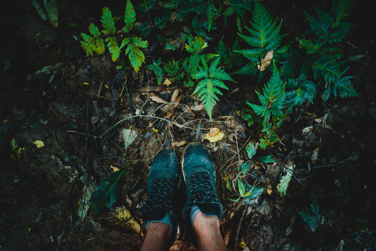 Low section of shoes person standing on field in rainforest
