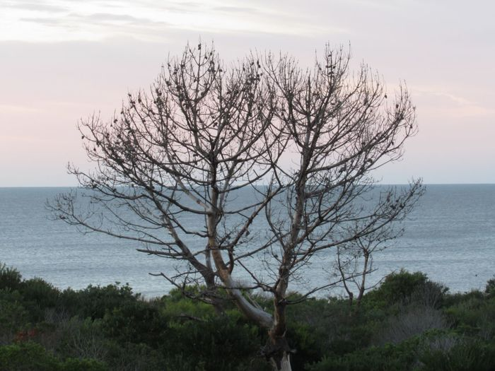 The old tree, watching the sea Sky Sea Water Beauty In Nature Tree Tranquility Plant Horizon Over Water Scenics - Nature Tranquil Scene Horizon Nature Land Beach No People Branch Non-urban Scene Day Bare Tree Outdoors This Is Aging