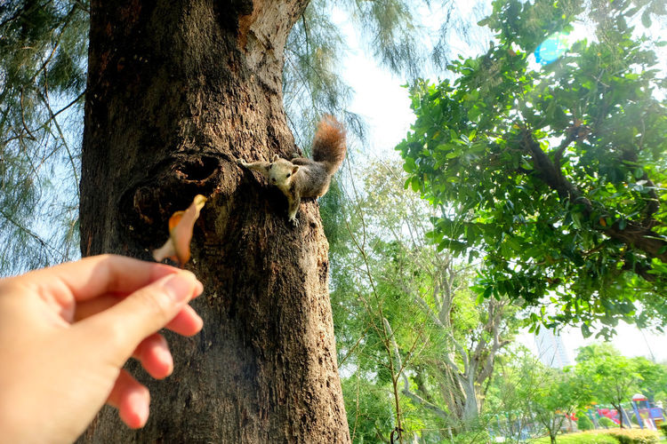 Cropped image of person holding tree trunk against plants