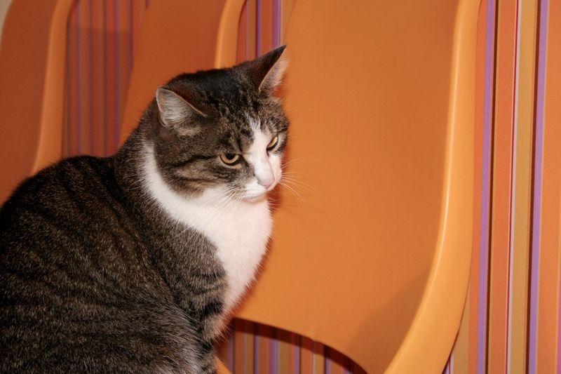 Animal Themes Cats Day Domestic Animals Domestic Cat EyeEm Diversity EyeEmNewHere Feline Indoors  Mammal No People One Animal Orange Color Pets Resist