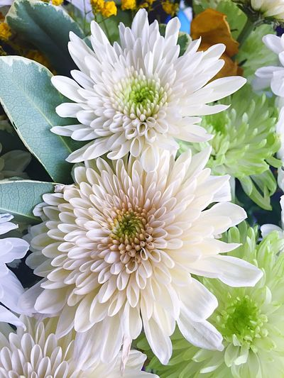 Flower Beauty In Nature Petal White Color Fragility Freshness Flower Head Nature No People Growth Close-up Plant Day Outdoors