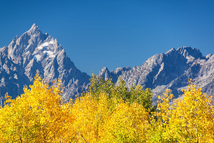 Aspen trees and Teton Range in Grand Teton National Park in the fall Alpine Bear Montana National Park Scenic Tetons Travel Tundra USA Wanderlust Wyoming Beartooth Destination Forest Grandteton Grandtetonnationalpark Landscape Lodge Mountain Overlook Peaks Range Valley Water Wilderness