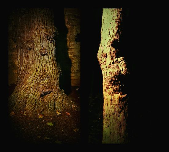 Night Photography Herbstspaziergang Nature Photography Trees Bad Langensalza