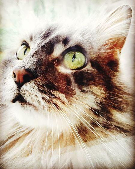 Cat Eyem Eyemphotography Love LovinLife Livinlifetothefullest Travel Photography Feline Washington