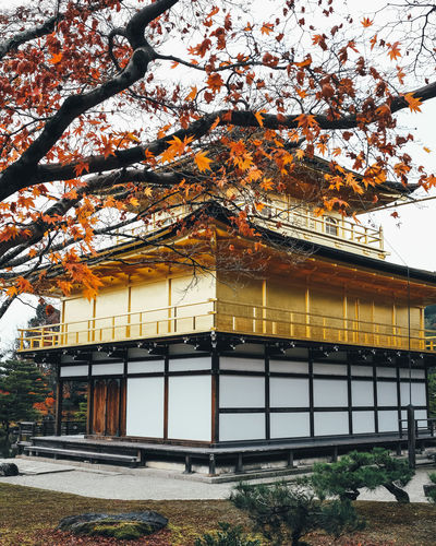 Golden Temple Built Structure Tree Architecture Building Exterior Plant Building Autumn Change Day Nature Growth No People Outdoors Branch House Orange Color Belief Religion Place Of Worship Spirituality Cherry Blossom It's About The Journey
