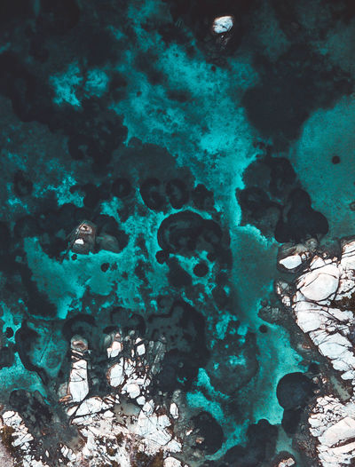 BLU. Water Sea Underwater Nature Sea Life Animals In The Wild Animal Wildlife No People UnderSea Beauty In Nature Marine Coral Rock Animal Themes Animal Rock - Object Invertebrate Day Close-up Ecosystem  Perspectives on Nature Colors Blue Rock