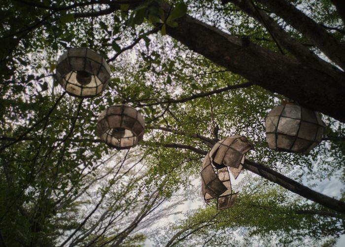 Old lantetns hanging on a tree 0LD Worn Worn Out Green Life EyeEm Gallery EyeEm Best Shots EyeEmNewHere EyeEm Selects EyeEm Best Edits Lifestyle Clouds And Sky Tree The Still Life Photographer - 2018 EyeEm Awards Tree Branch Lantern Hanging Sky
