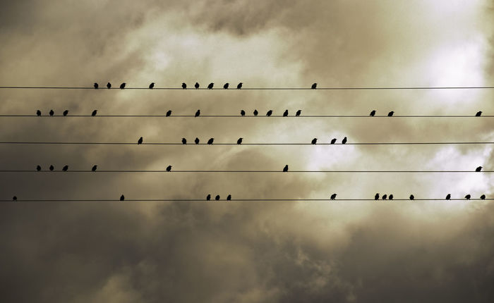 Animal Themes Animals In The Wild Bird Cable Cloud - Sky Flock Of Birds Flying Large Group Of Animals Migrating Musica Napatu Nature Outdoors Silhouette Sky Togetherness