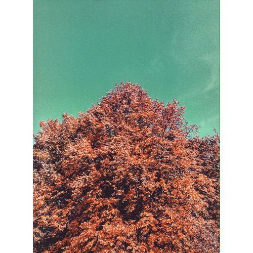 Winter Green Sky Tree Shaft First Eyeem Photo