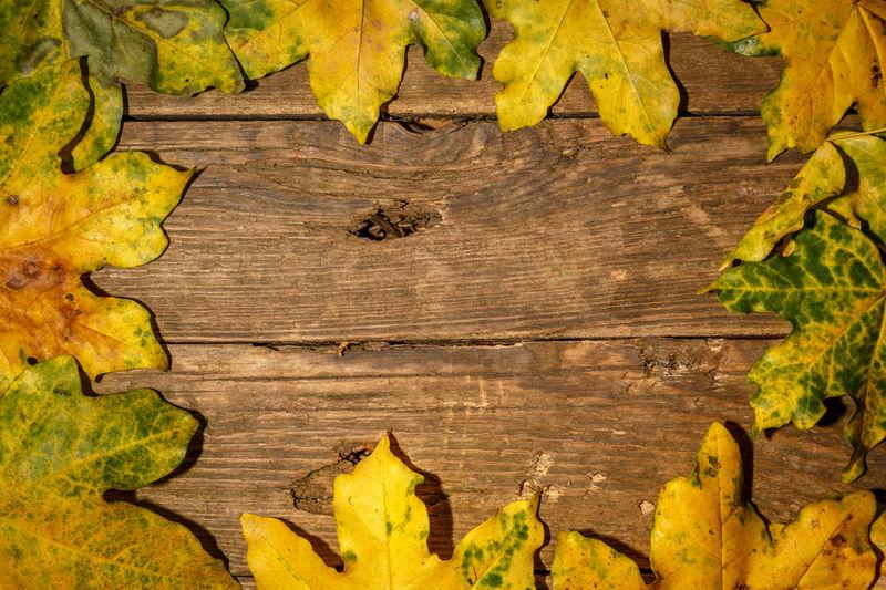 Full frame shot of yellow leaves on wooden plank