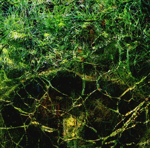 Beauty In Nature EyeEm Best Shots - Nature Green Grass EyeEmNewHere Overlay Editing Glass - Material Abstract Photography Abstract Backgrounds Full Frame Close-up Green Color Nature Day