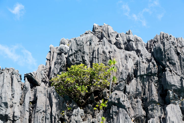 Low angle view of plants growing on rock against sky