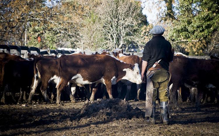Argentina Photography Blackandwhite Photography Campo Argentino Countryside Gaucho Argentino Gauchos Hombre De Trabajo Man And Horse Pasture Rural Scene Trabajo De Machos  Trabajo Duro Vidagaucha