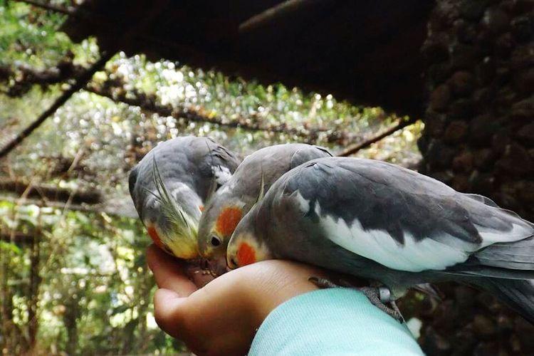 My Smartphone Life Ninfa Birds Animal Photography Animal Portrait EyeEm Gallery
