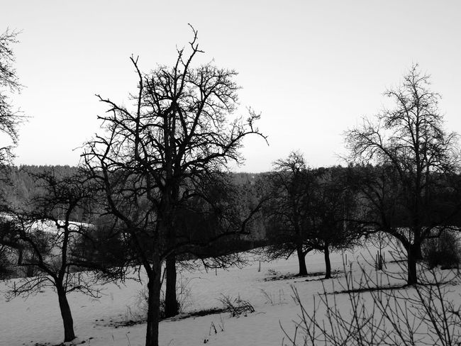 trees at german winter Baden-Württemberg  South Bare Tree Beauty In Nature Blackandwhite Branch Clear Sky Cold Cold Temperature Day Frozen Germany Landscape Nature No People Outdoors Scenics Sky Snow Snowy Tranquil Scene Tranquility Tree Weather Winter