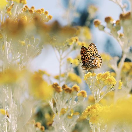 Spring! Pastel Power Everything In Its Place Nature Color Palette Butterfly Flowers Art Is Everywhere