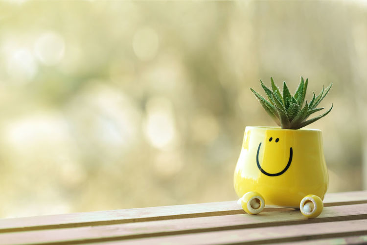 Miniature green scculent in funny bright yellow pot stands on wooden. Soft light. Be Happy Good Day Green Color Grid Neutral Colors Plant Soft Light Be Smile Blurred Background Ceramics Face Funny Faces Good Morning Positive Emotion Pot Smile Soft Focus Succulent Summer Wooden Yellow